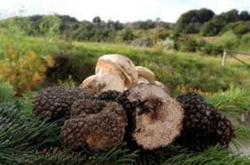 Modulistica funghi e tartufi